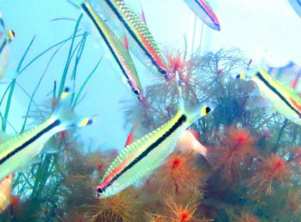 Miss_Kerala_fish.JPG.crop_display.jpg